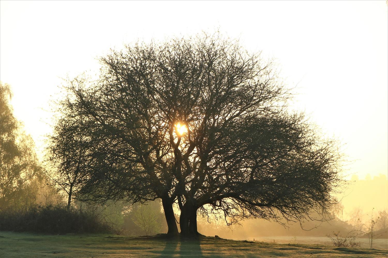 tree KHC